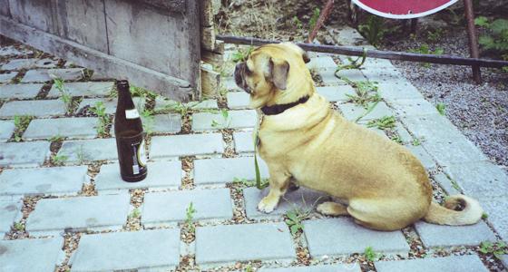 Anbetung einer Flasche